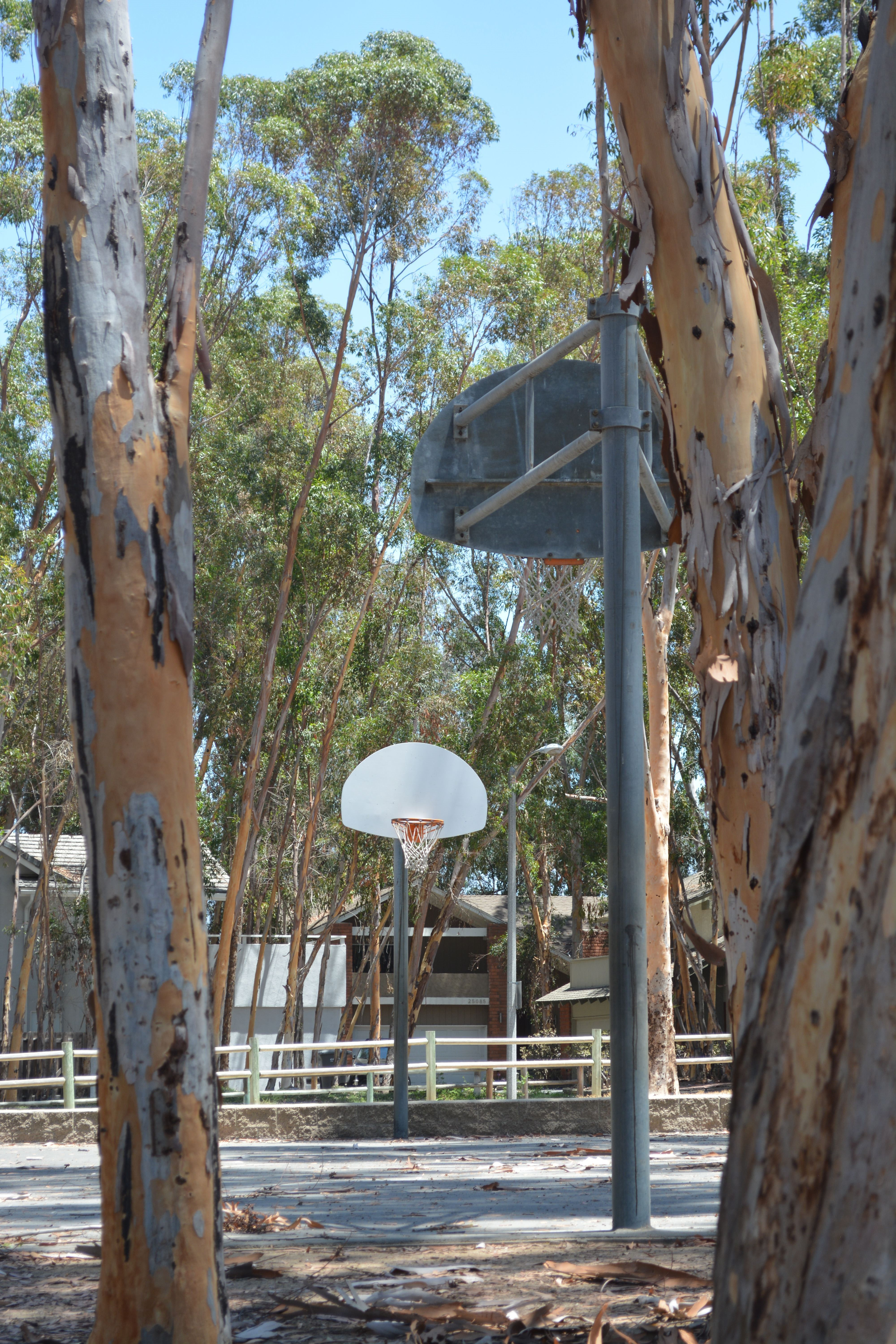 Looking at basketball court through the trees.